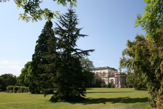 Mammutbaum und Libanon-Zeder vor der Villa Monreopos (heute ein Teil der Hochschule Geisenheim University). Foto: V. A. Bouffier
