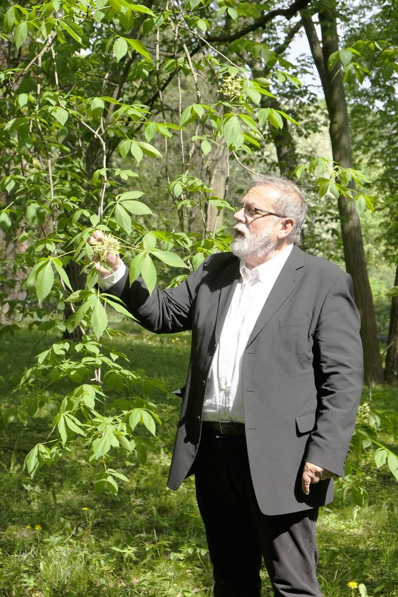 Prof. Dr. Peter A. Schmidt erläutert die Art Aesculus glabra - Ohio-Rosskastanie, 2019 (Foto: Martin Ibold)
